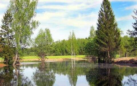 Лесные пруды